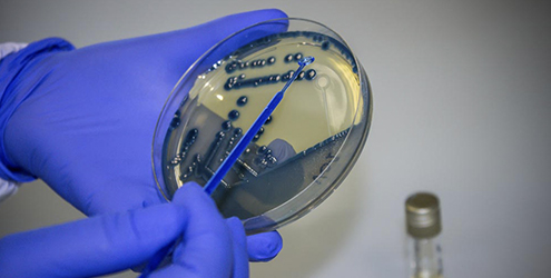 Reagente Mikrobiologjie Liofilchem